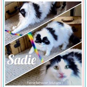Sadie - Testimonial