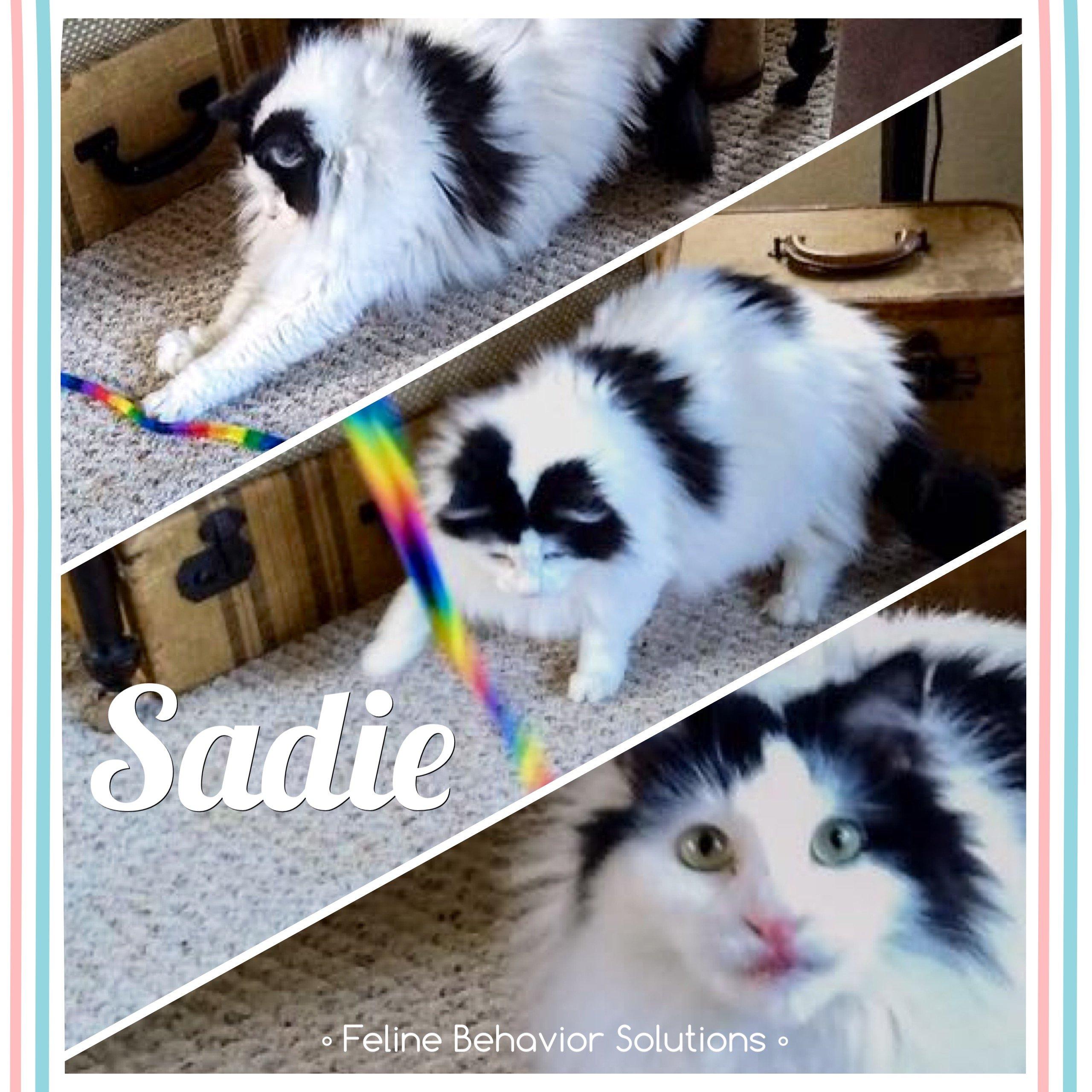 Sadie-Testimonial
