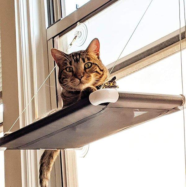 Kitty Kot (Large) Image